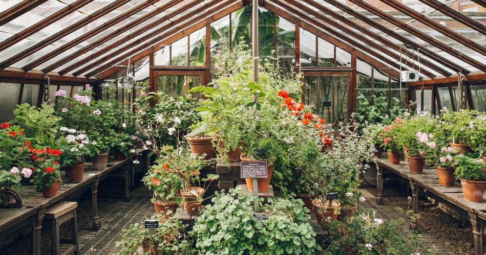 Image 2: Chelsea Physic Garden